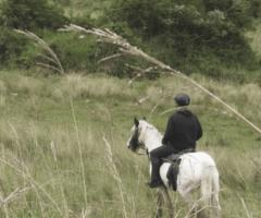 A cheval dans la Pandanaie